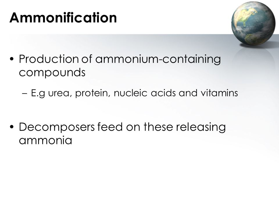 Ammonification Production of ammonium-containing compounds