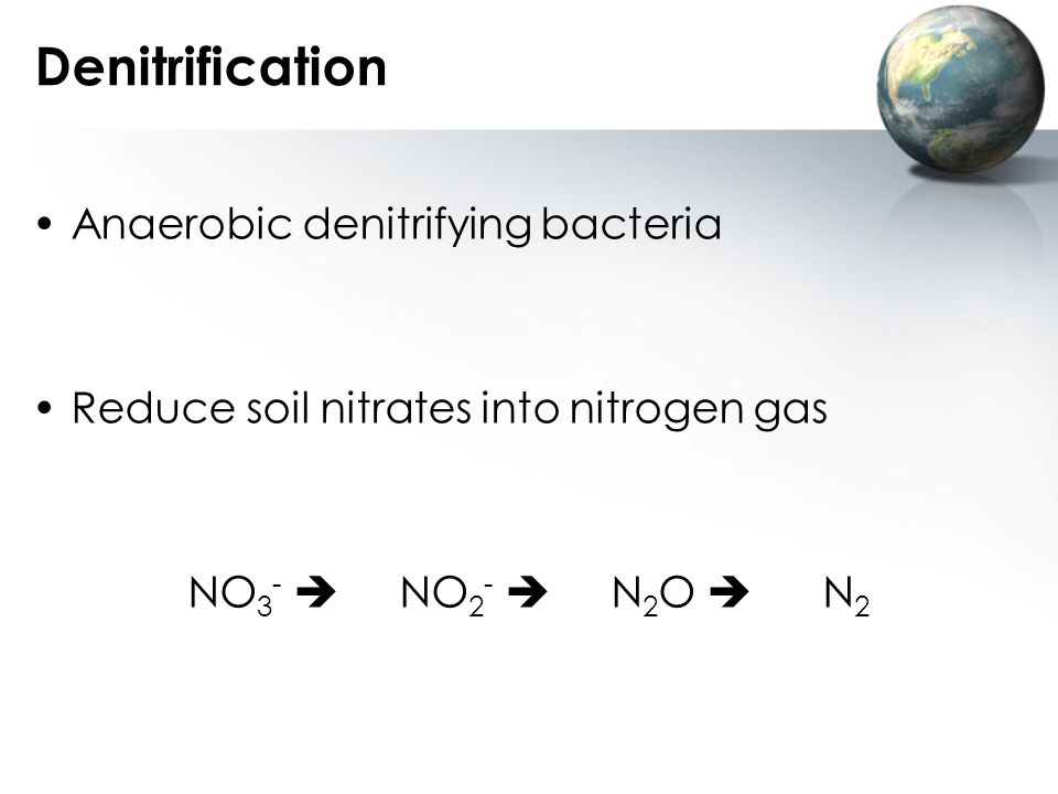 Denitrification Anaerobic denitrifying bacteria