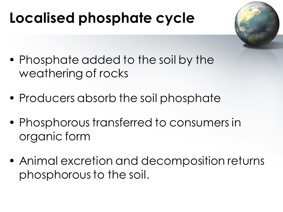 Localised phosphate cycle