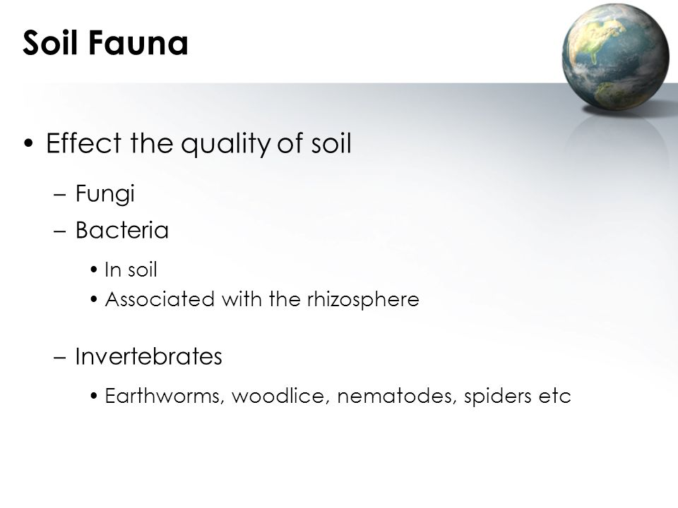 Soil Fauna Effect the quality of soil Fungi Bacteria Invertebrates