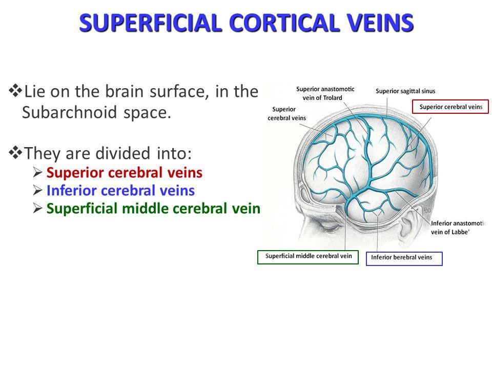 Cerebral Blood Circulation - ppt video online download