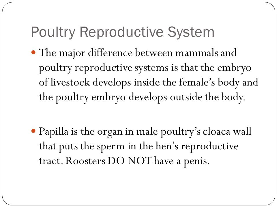 Poultry Reproductive System Ppt Video Online Download