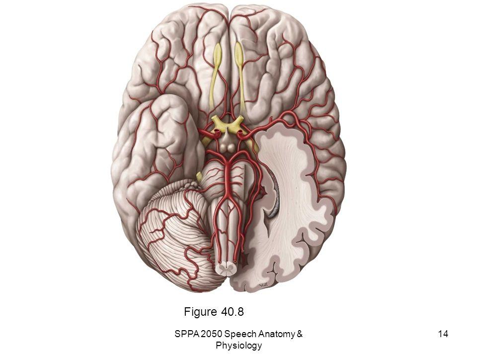 SPPA 2050 Speech Anatomy & Physiology - ppt video online download