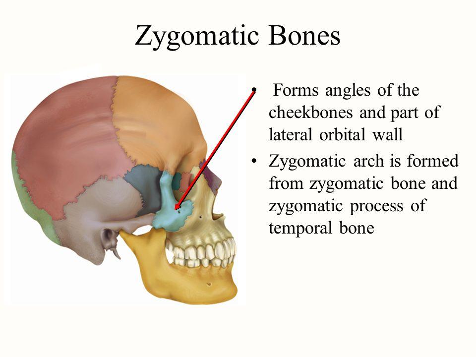 Tolle Cheek Bones Anatomy Fotos - Anatomie Ideen - finotti.info