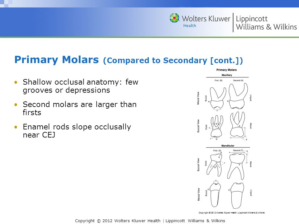 Chapter 6: Primary (and Mixed) Dentition - ppt video online download