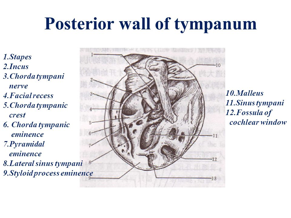 Clinical anatomy & physiology of the ear - ppt video online download