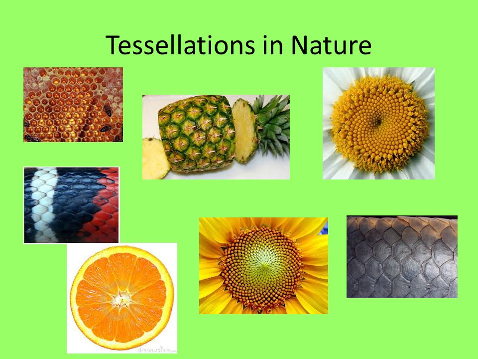 Regular Polygons In Nature Tessellations. - ppt v...