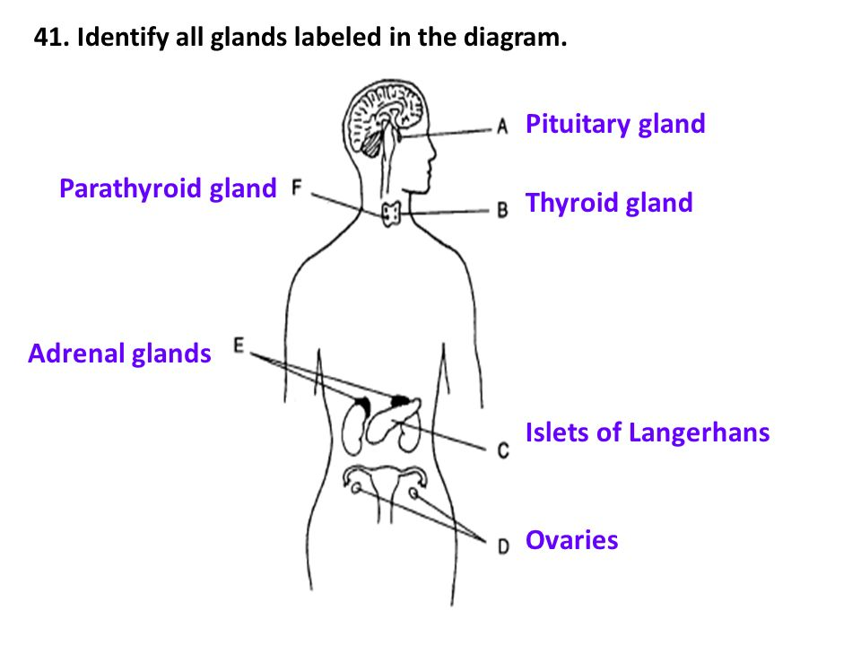 Nervous And Endocrine Systems Review 7a Ppt Video Online Download