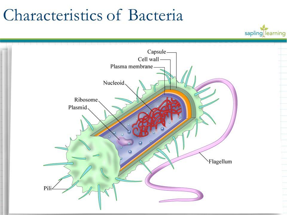 Characteristics+of+Bacteria bacteria characteristics of bacteria reproduction of bacteria
