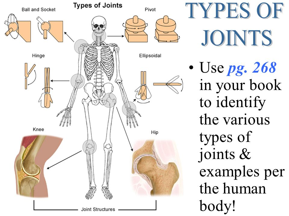 HUMAN ANATOMY JOINTS (aka… articulations). - ppt video online download