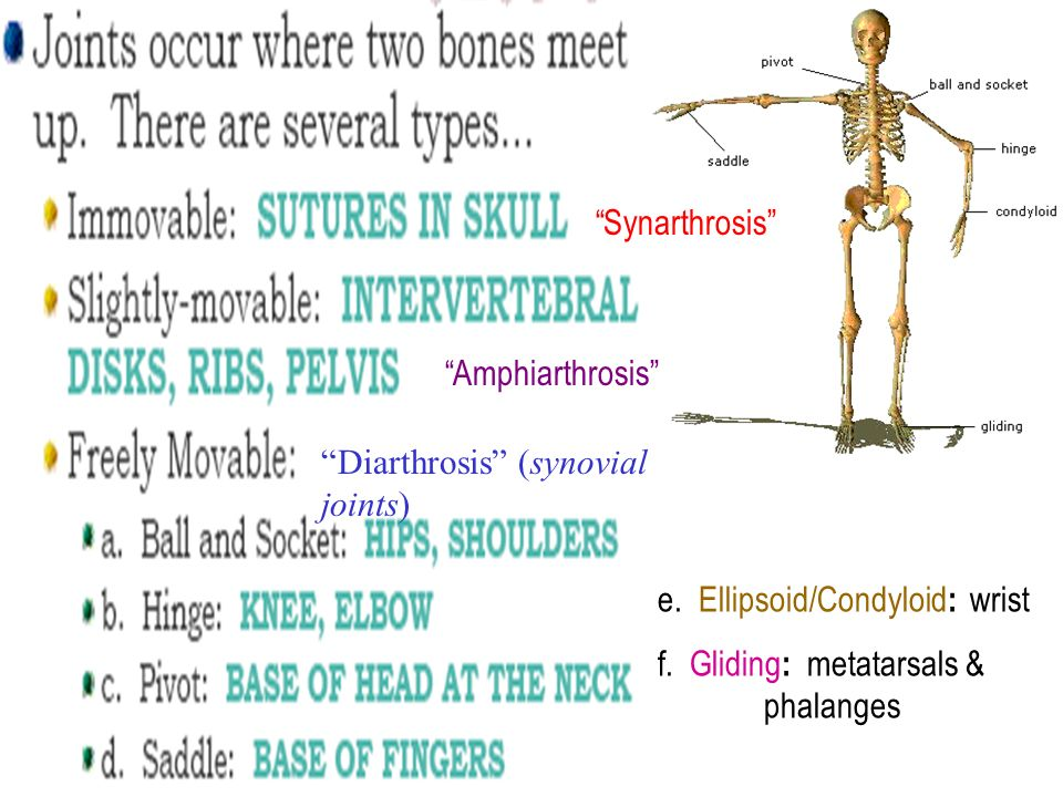 Human Anatomy Joints Aka Articulations Ppt Video Online Download