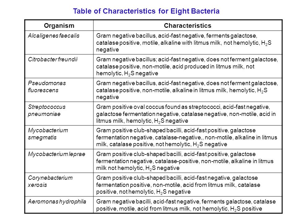 How To Make A Dichotomous Key From A Table Of Bacterial
