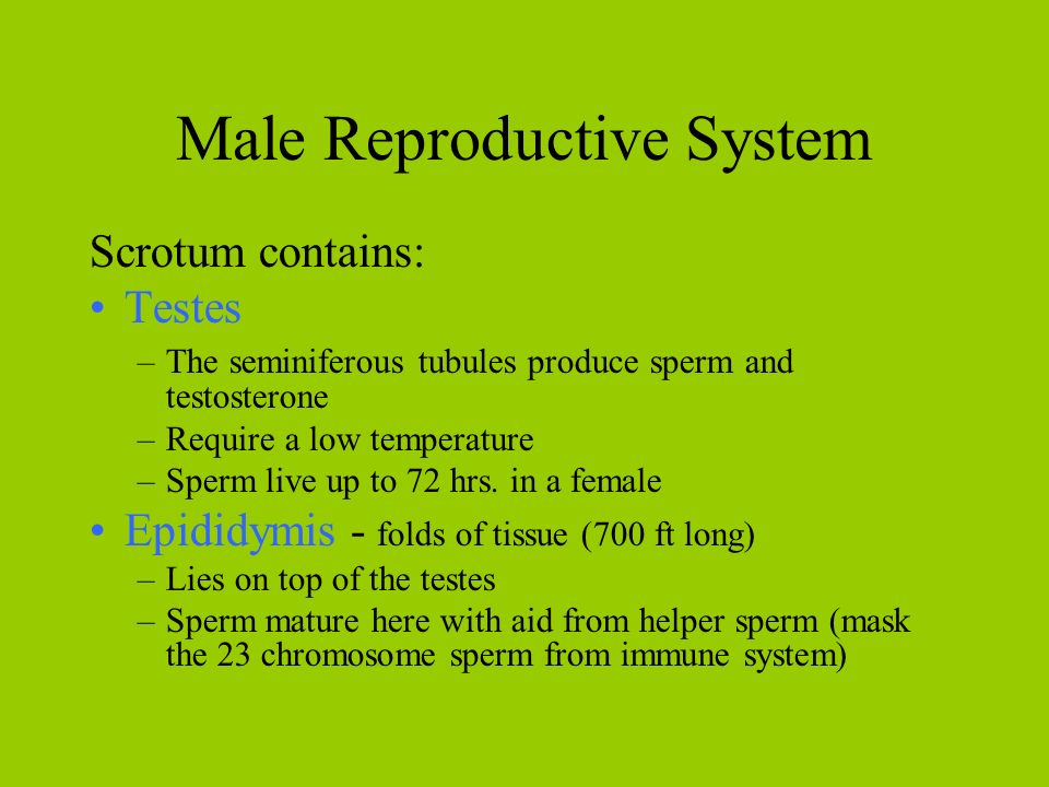 sperm and imune system