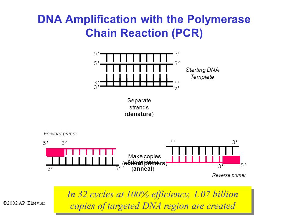 The Polymerase Chain Reaction (DNA Amplification) - ppt video online ...