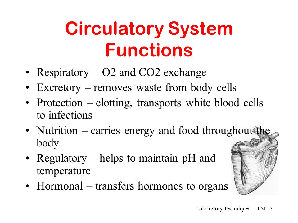 Circulatory System Functions - ppt video online download