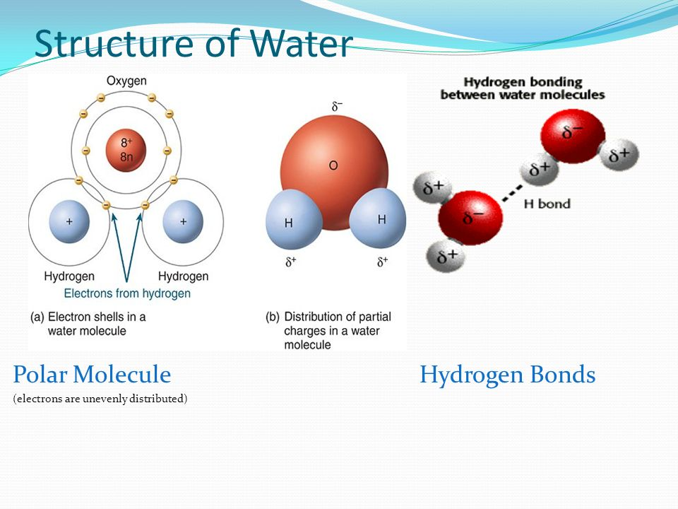 Sc912l Properties Of Water That Contribute To Earths Suitability