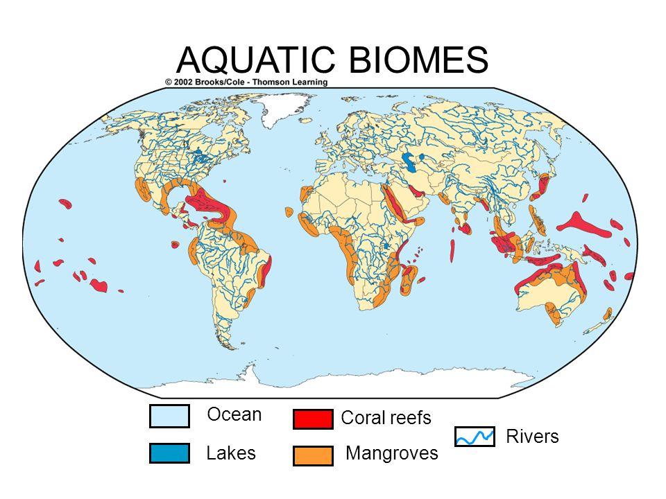 2 4 1 define the term biome explain the distribution structure and