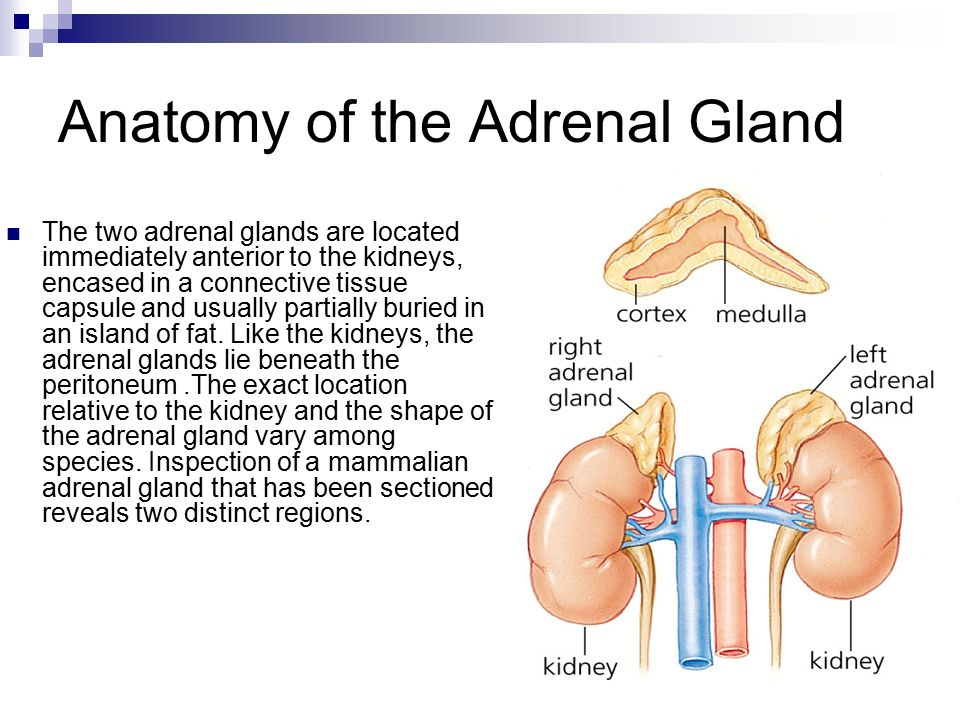 Thyroid Gland Parathyroid Gland Adrenal Gland Ppt Video Online