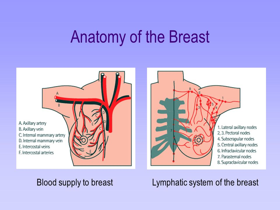 Anatomy And Physiology Of The Breast Ppt Video Online Download