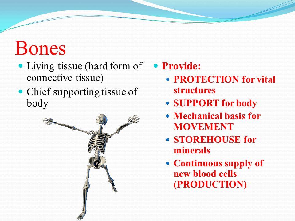 4 bones