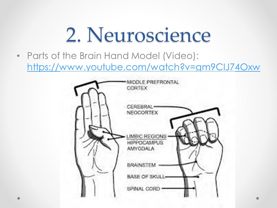 2. Neuroscience Parts of the Brain Hand Model (Video): https://www.youtube.com/watch v=gm9CIJ74Oxw