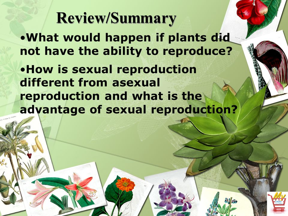 Asexual reproduction plants disadvantages of e-commerce