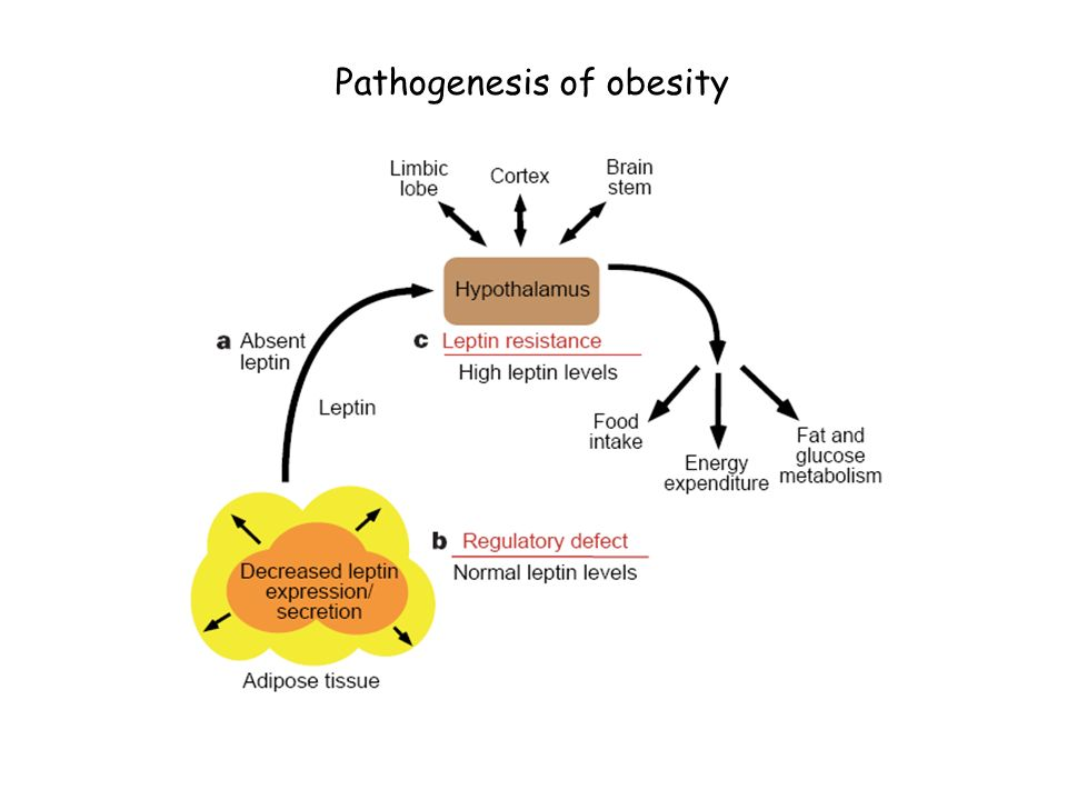 Chapter 6: overweight and obesity ppt video online download.