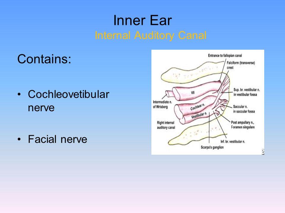 Contemporary Internal Auditory Meatus Anatomy Photos - Anatomy And ...