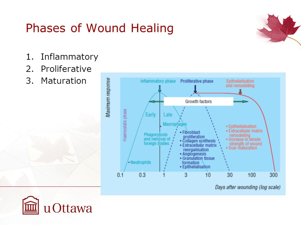 phases of wound healing