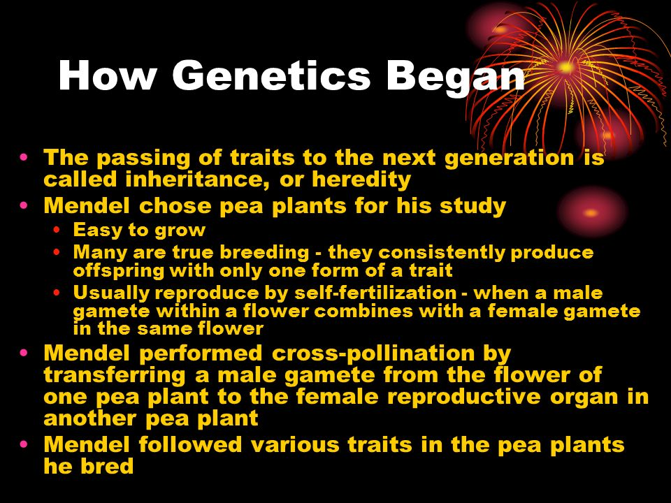 How Genetics Began The passing of traits to the next generation is called inheritance, or heredity.