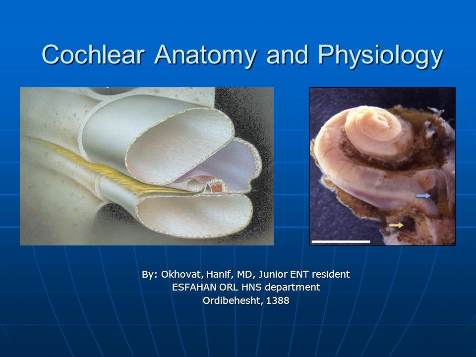 Cochlear Anatomy and Physiology - ppt download