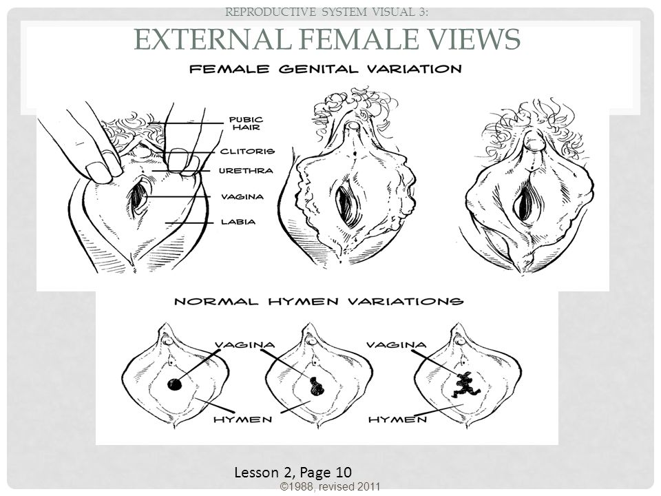 Reproductive System Ppt Video Online Download