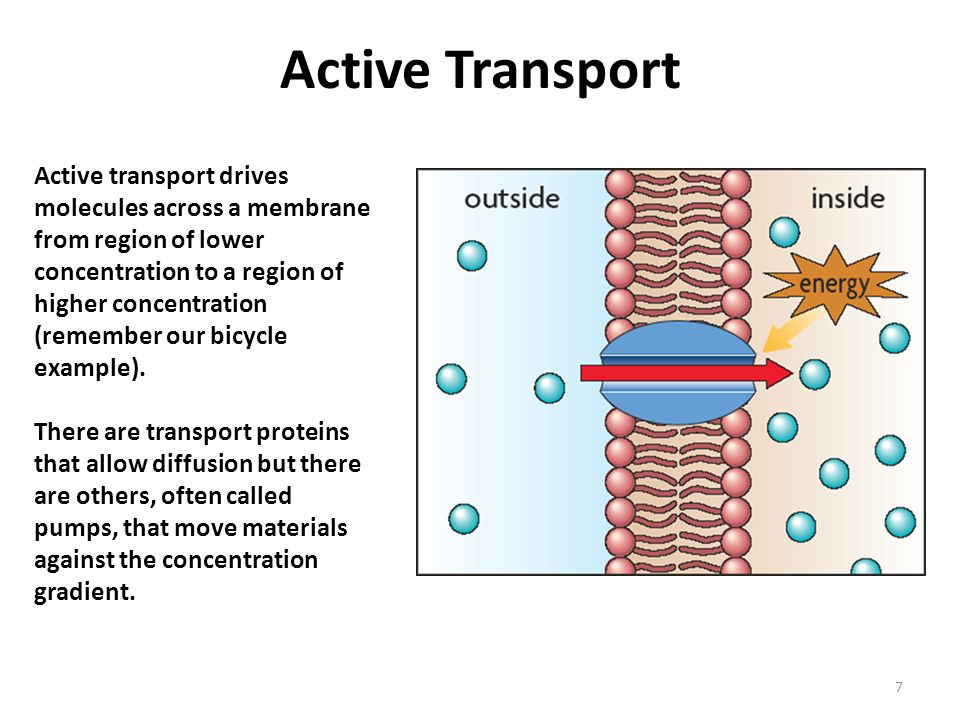 Active Transport Protein Pumps And Endocytosis Ppt Video Online