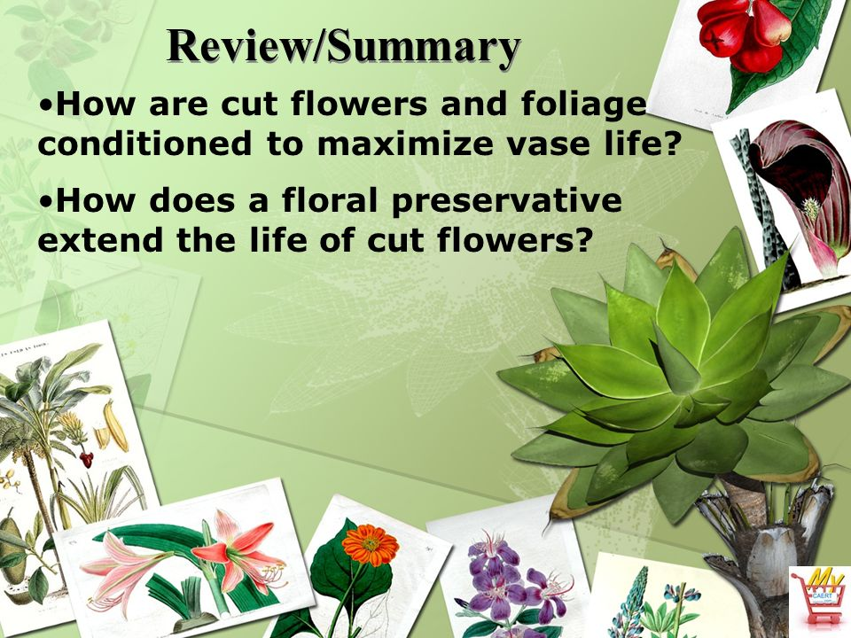 When A Flower Is Cut What Are Its Needs Ppt Video Online Download