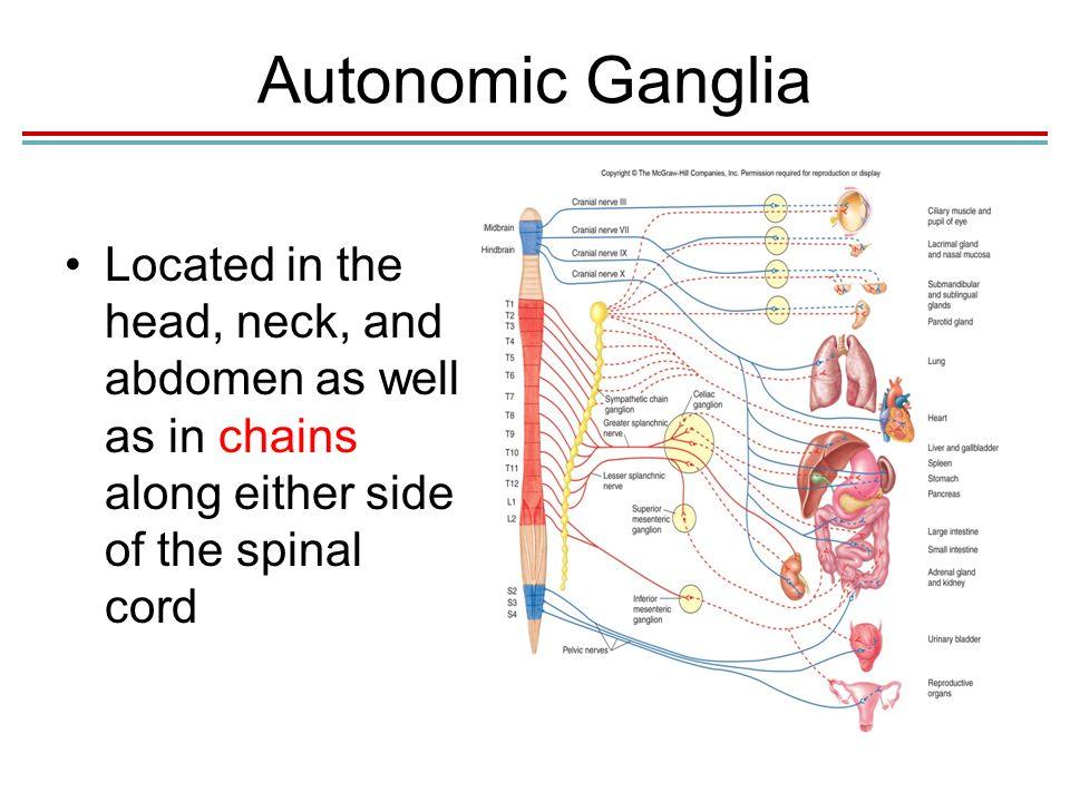 chapter 9 the autonomic nervous system lecture powerpoint