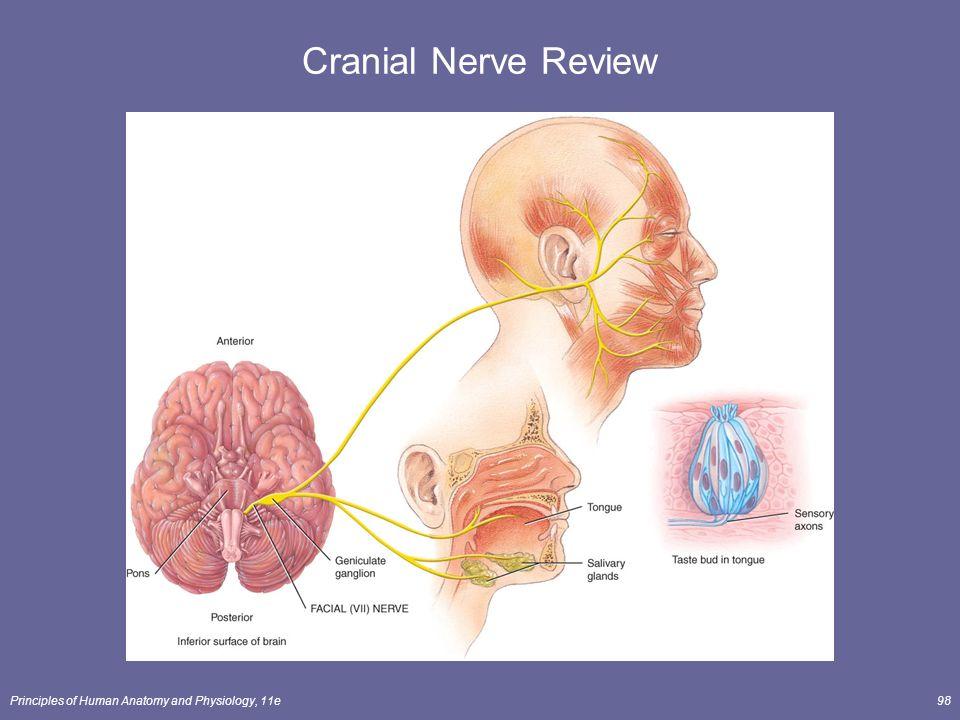 Excepcional Anatomy And Physiology Cranial Nerves Colección de ...