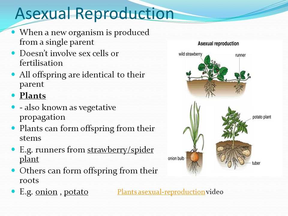 Plant cuttings asexual reproduction video