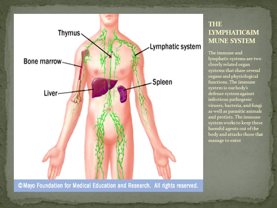 The Muscular System The Muscular System Is Responsible For The