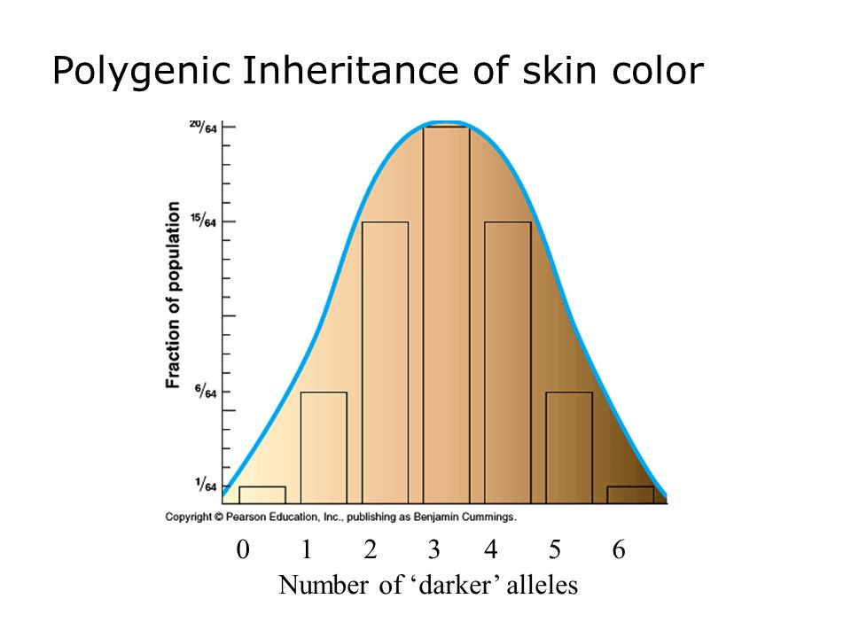 polygenic inheritance skin colour