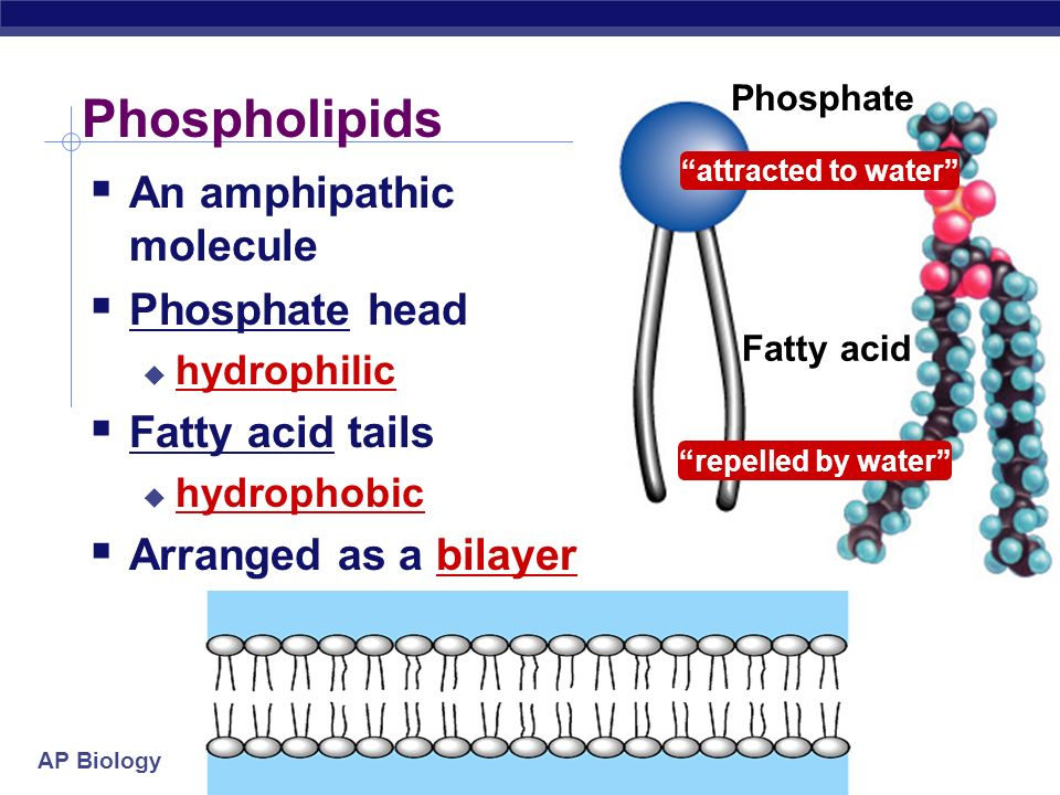 Chapter 7: Membrane Structure & Function - ppt video online
