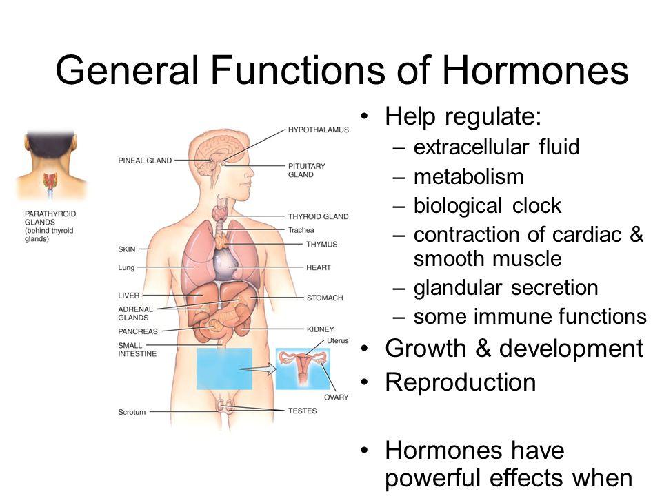 Endocrine Online Notes Ppt Video Online Download