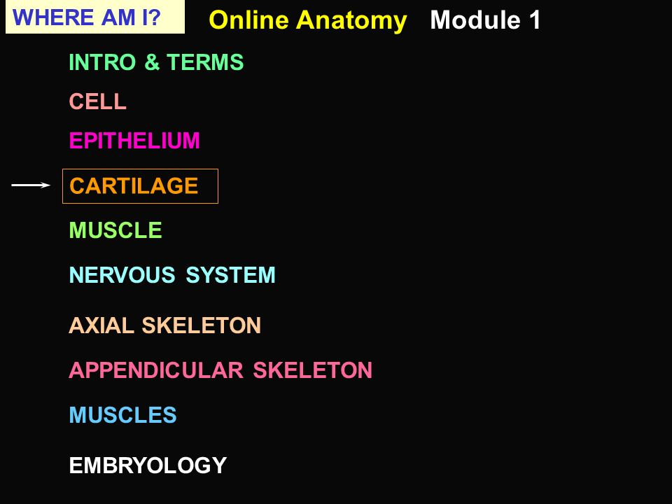 Online Anatomy Module 1 Where Am I Intro Terms Cell Epithelium