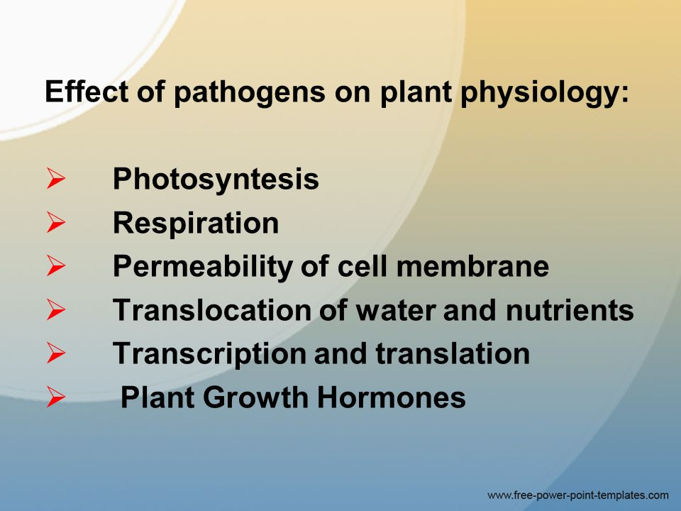 plant physiology ppt