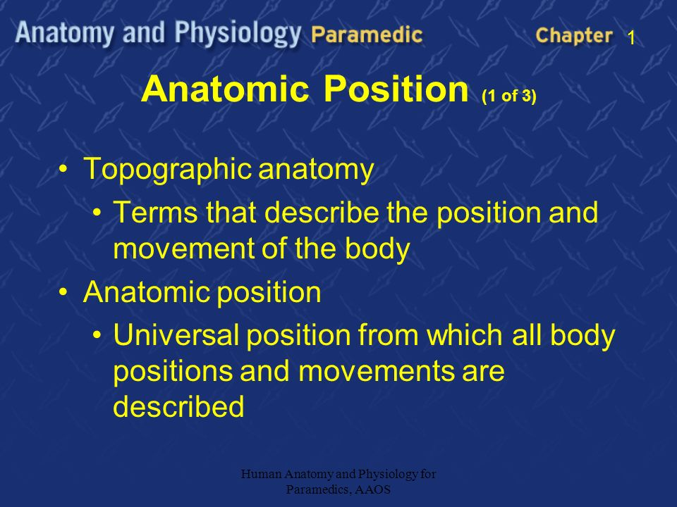 Anatomic Definitions 1 Introduce Chapter 1 Goals Ppt Download