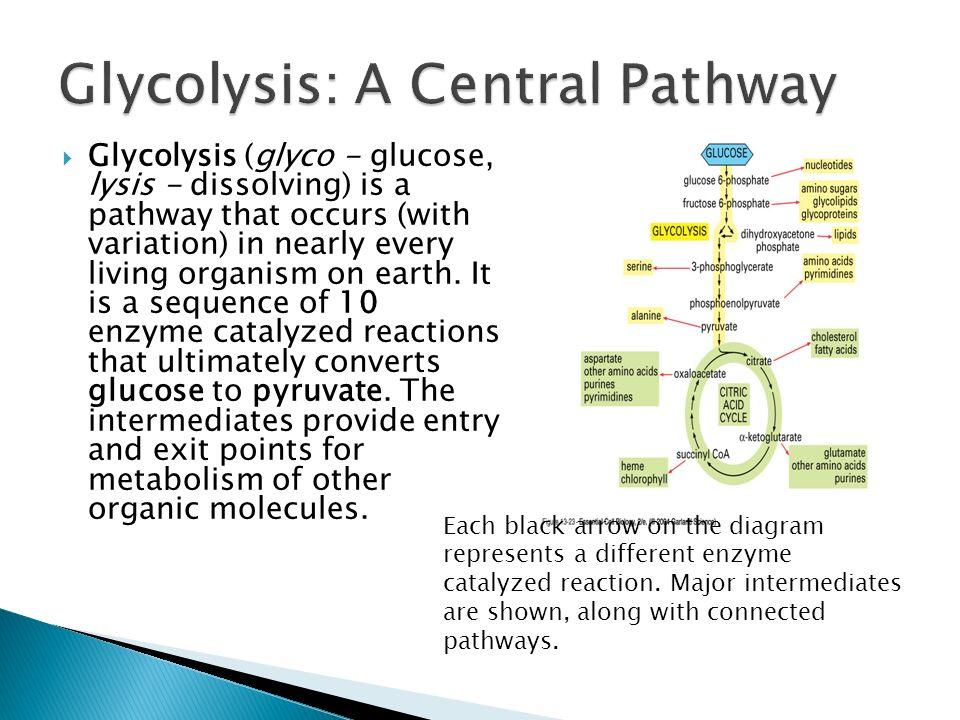 Glycolysis diagram color basic guide wiring diagram glycolysis ppt video online download rh slideplayer com glycolysis cycle diagram easy glycolysis cycle diagram ccuart Choice Image