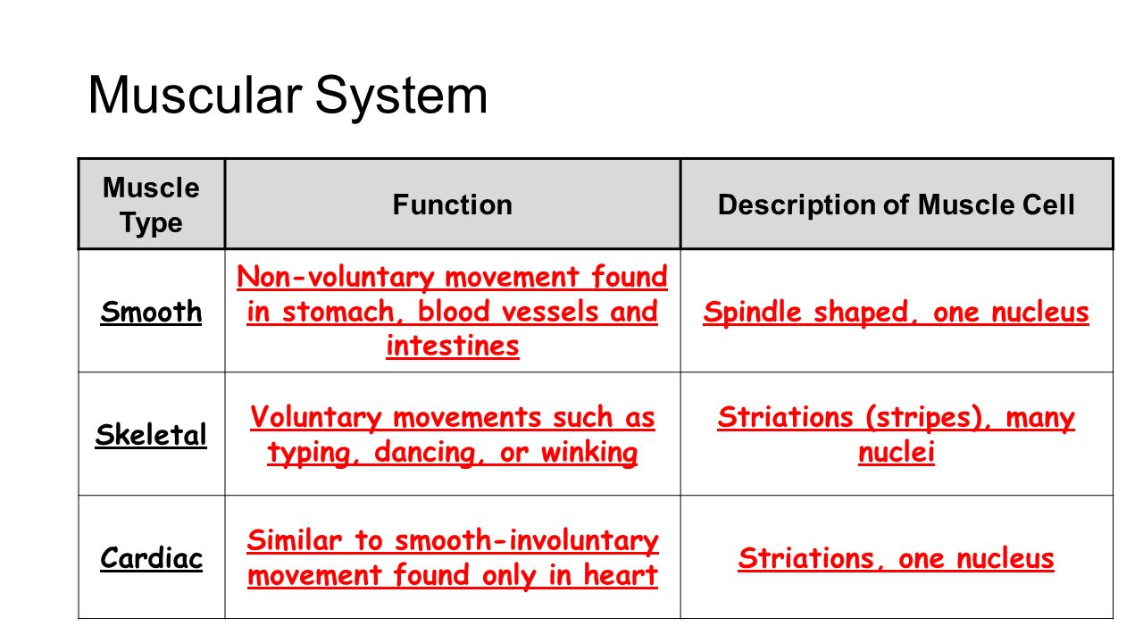 Human Body Ppt Video Online Download