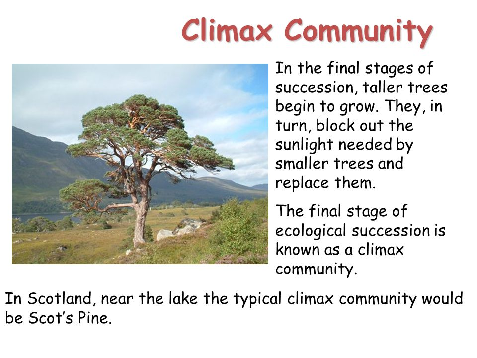 Communities and succession ppt video online download climax community publicscrutiny Images