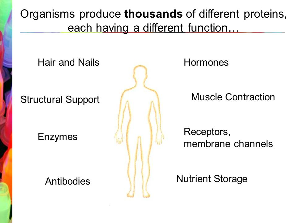 An introduction to the role of protein molecules in the human body.