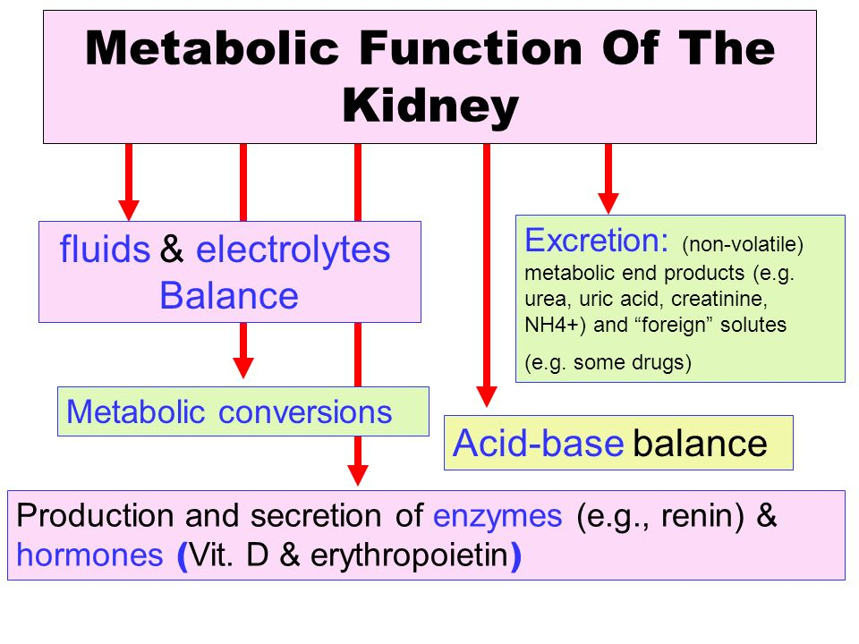 Metabolic Function Of The Kidney Ppt Video Online Download