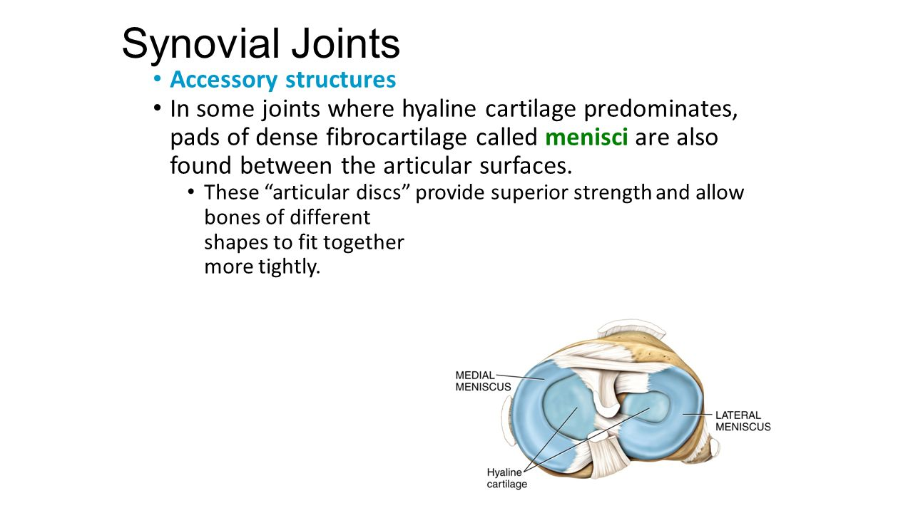 Chapter 9 Joints Lecture Slides Prepared By Curtis Defriez Weber Synovial Joint Diagram 13 Accessory Structures